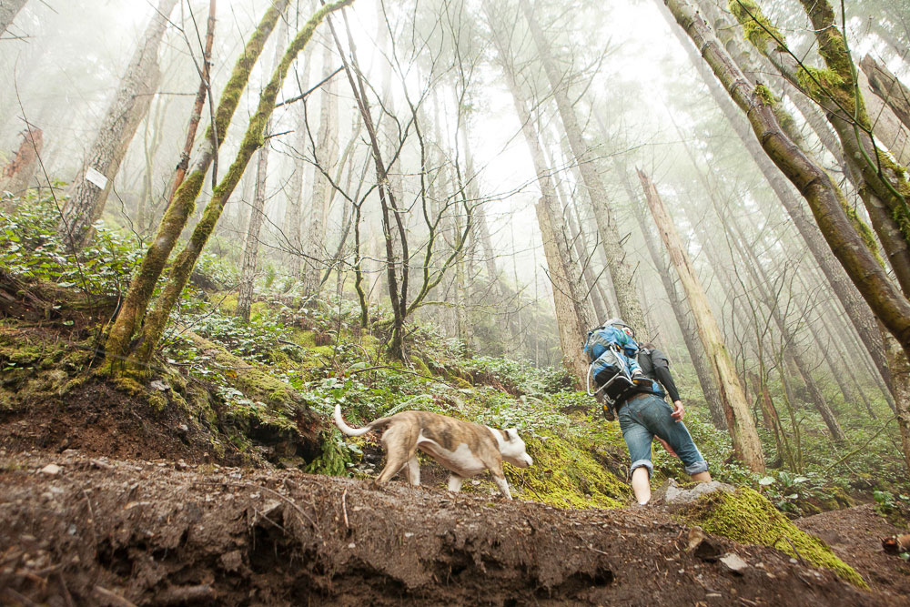 Hiking with dogs