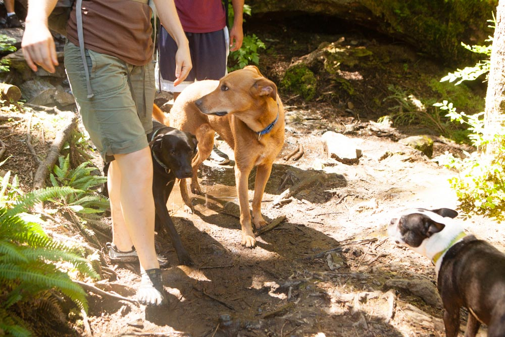 Hiking with Dogs Oregon trails