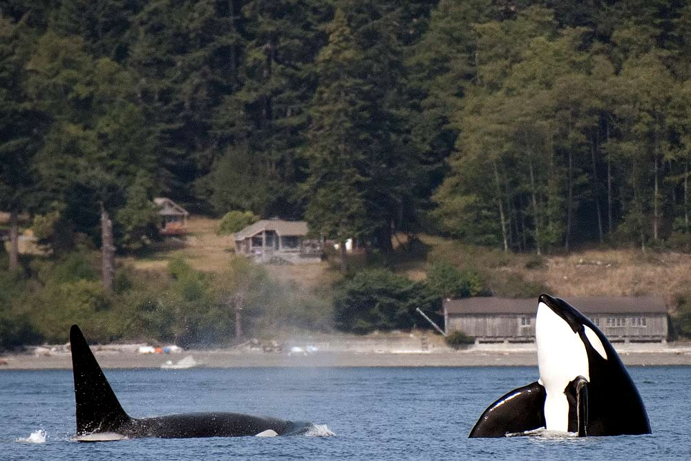 northwest wildlife hikes orca