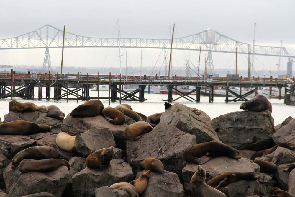 northwest wildlife hikes sea lion