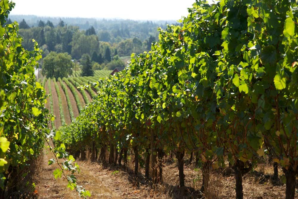 hikes near wineries sokol