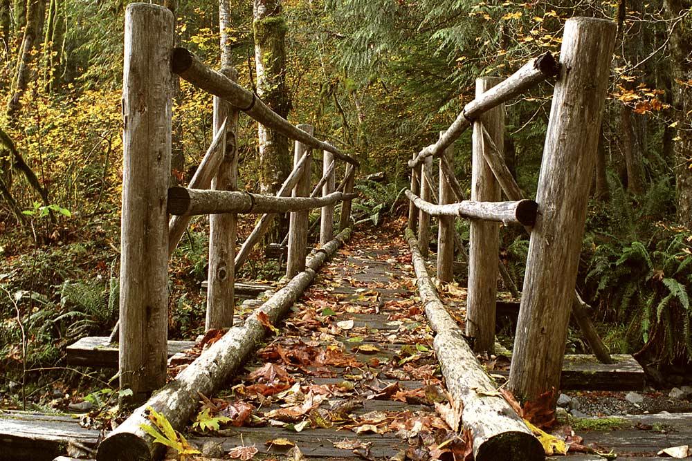 wild trails bridge