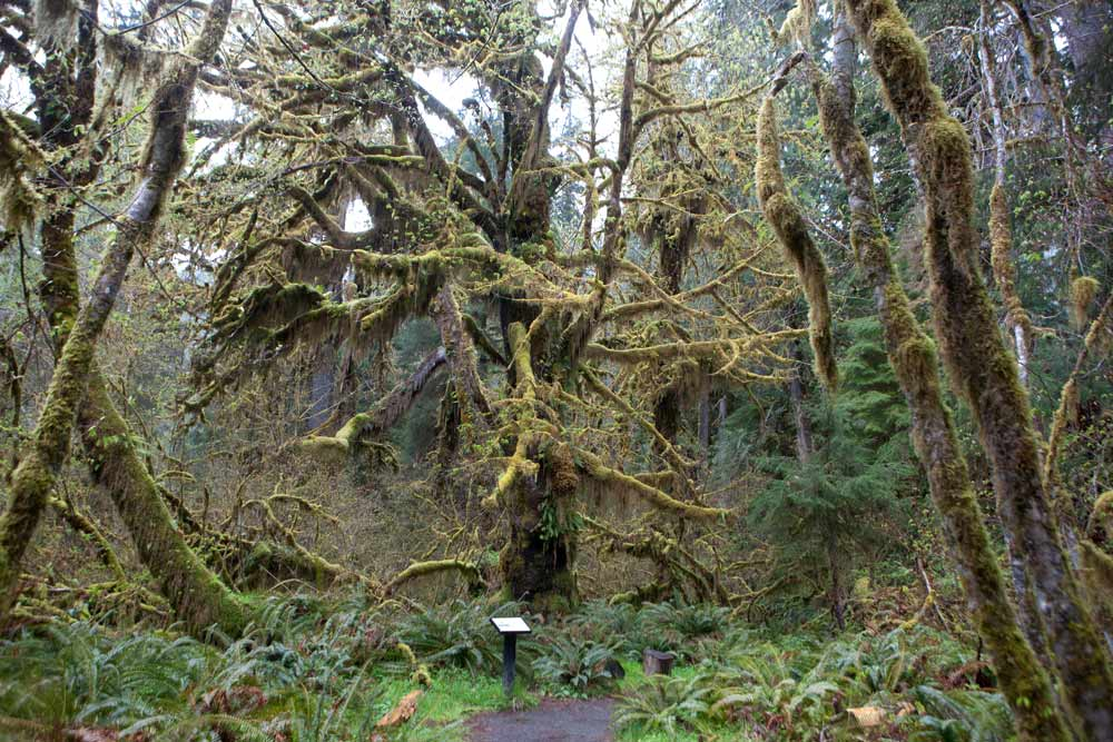 national parks - olympic national park