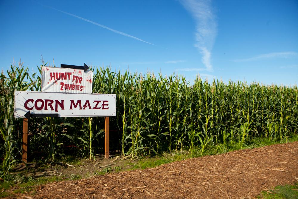 ANW_Corn Maze