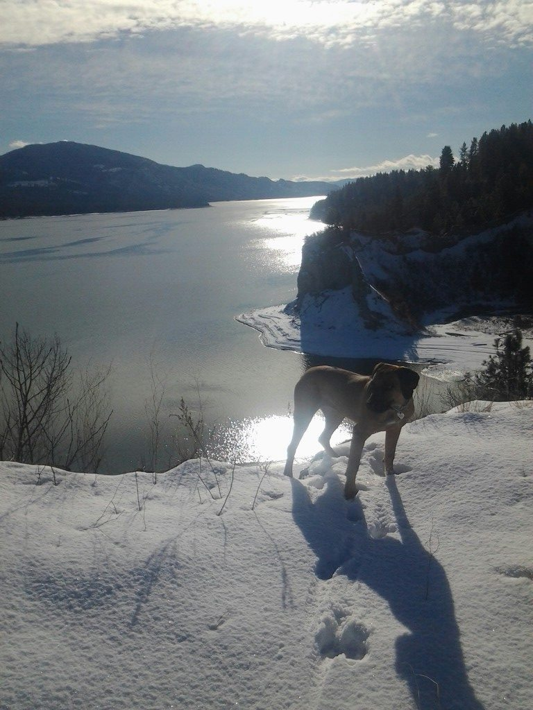 Rhodie at Sherman Point (Kettle Falls, WA) - Charlotte Whitney