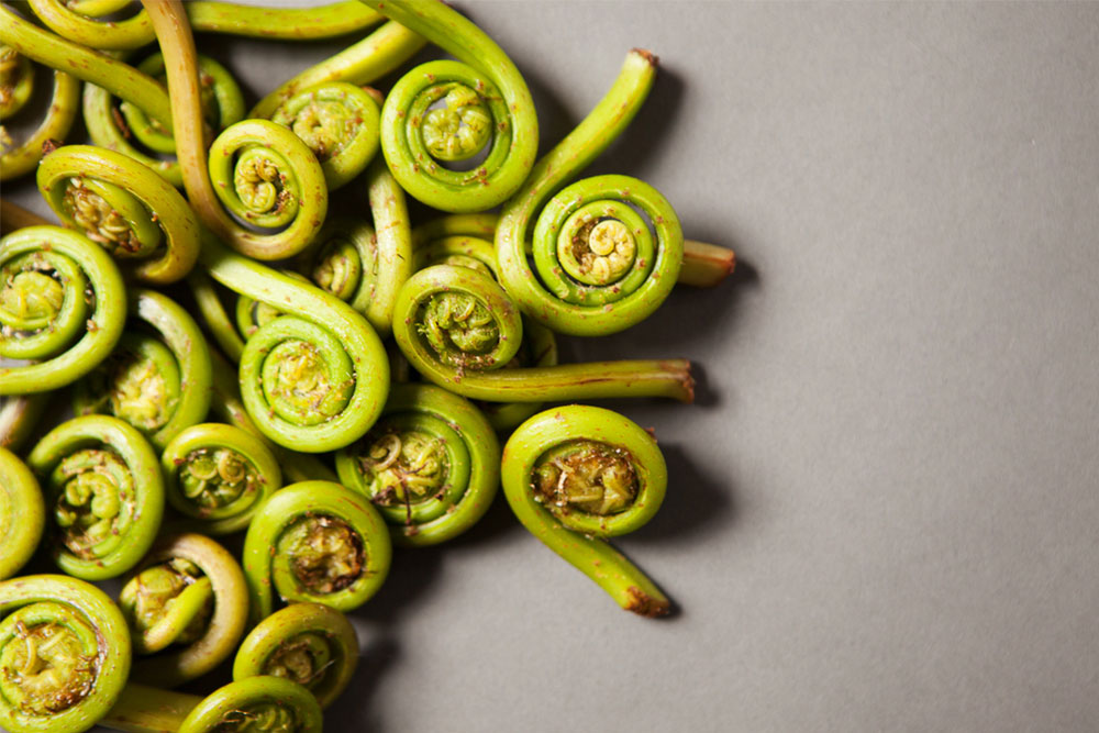 Fiddlehead-Ferns