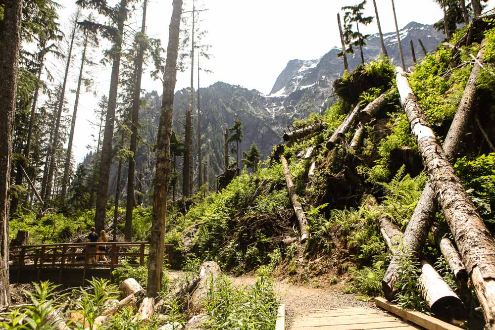 Summer Hiking Challenge forest