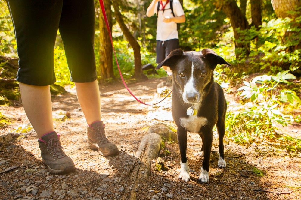 Hiking with Dogs hiking trail etiquette