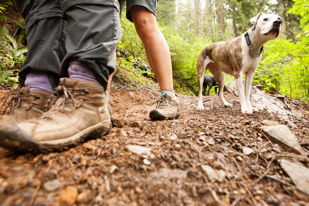 The Ultimate Northwest Summer Hiking Guide dogs