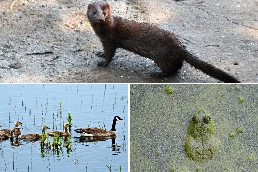 nisqually wildlife refuge animals